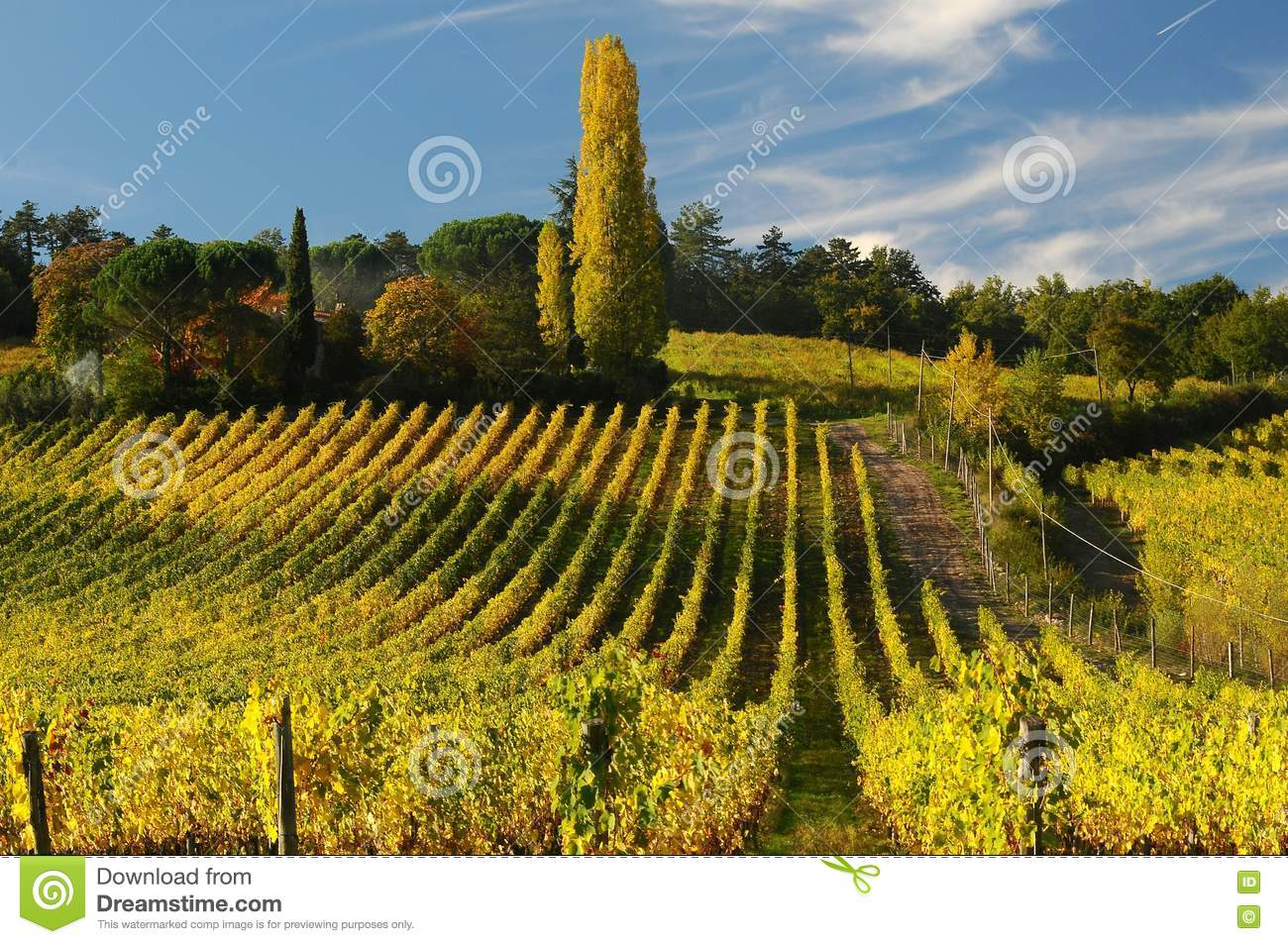 Wineyards i Tuscany, Chianti, Italien