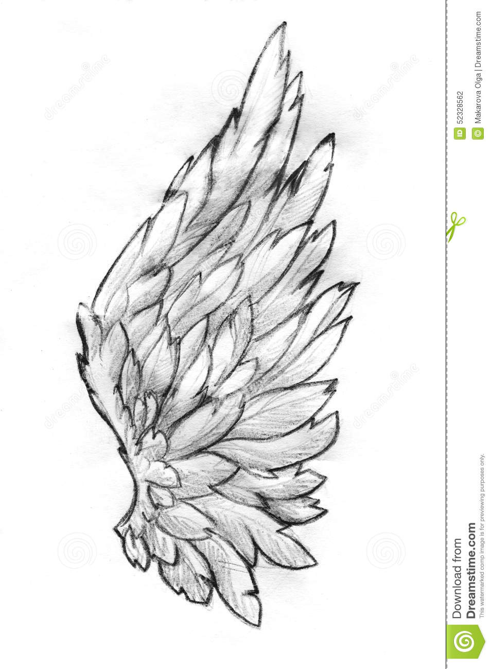 Wing pencil sketch