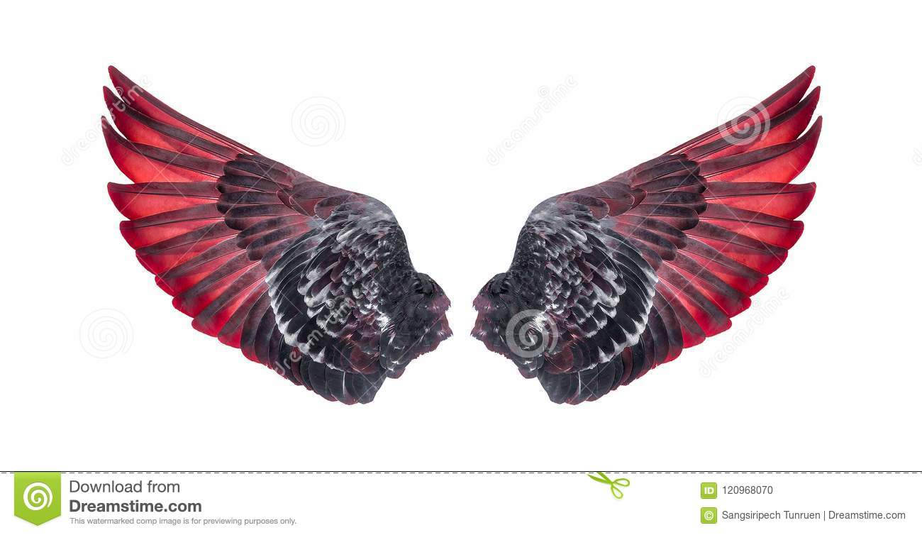 Wings of birds isolated on white background