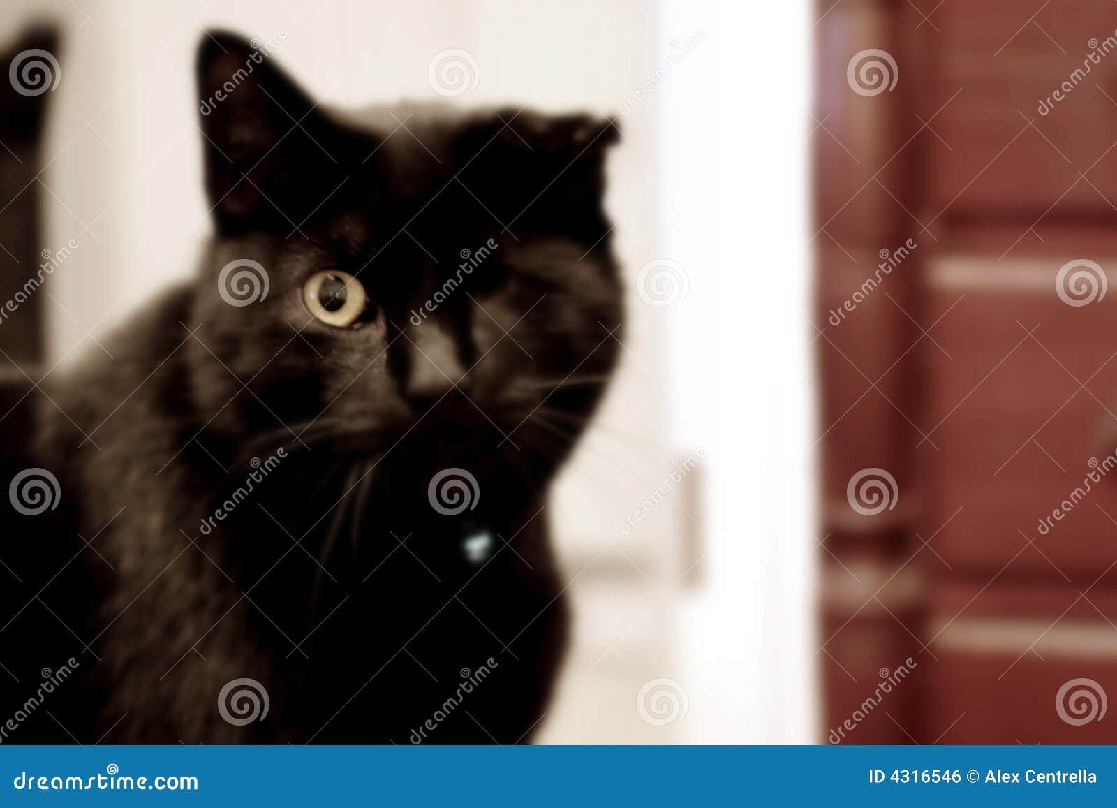 Winking Cat