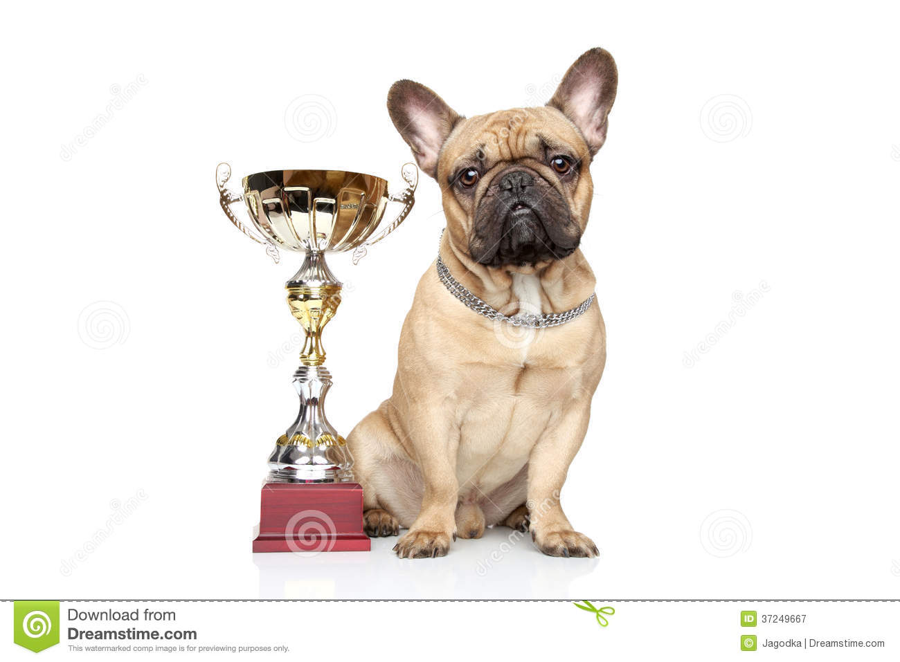 Best In Show Dog Trophy