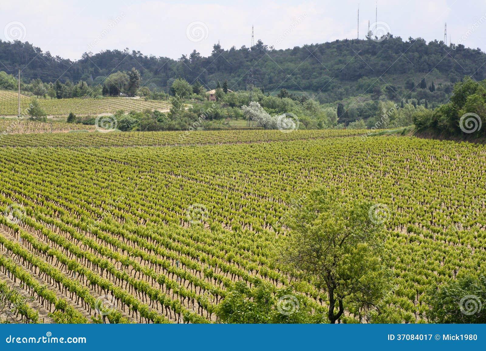 Download Winnica obraz stock. Obraz złożonej z natura, greenbacks - 37084017