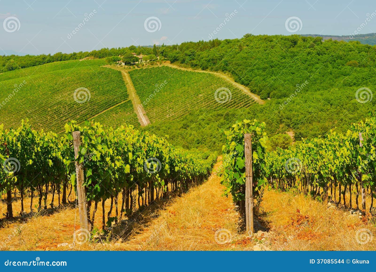 Download Winnica zdjęcie stock. Obraz złożonej z fielder, krajobraz - 37085544