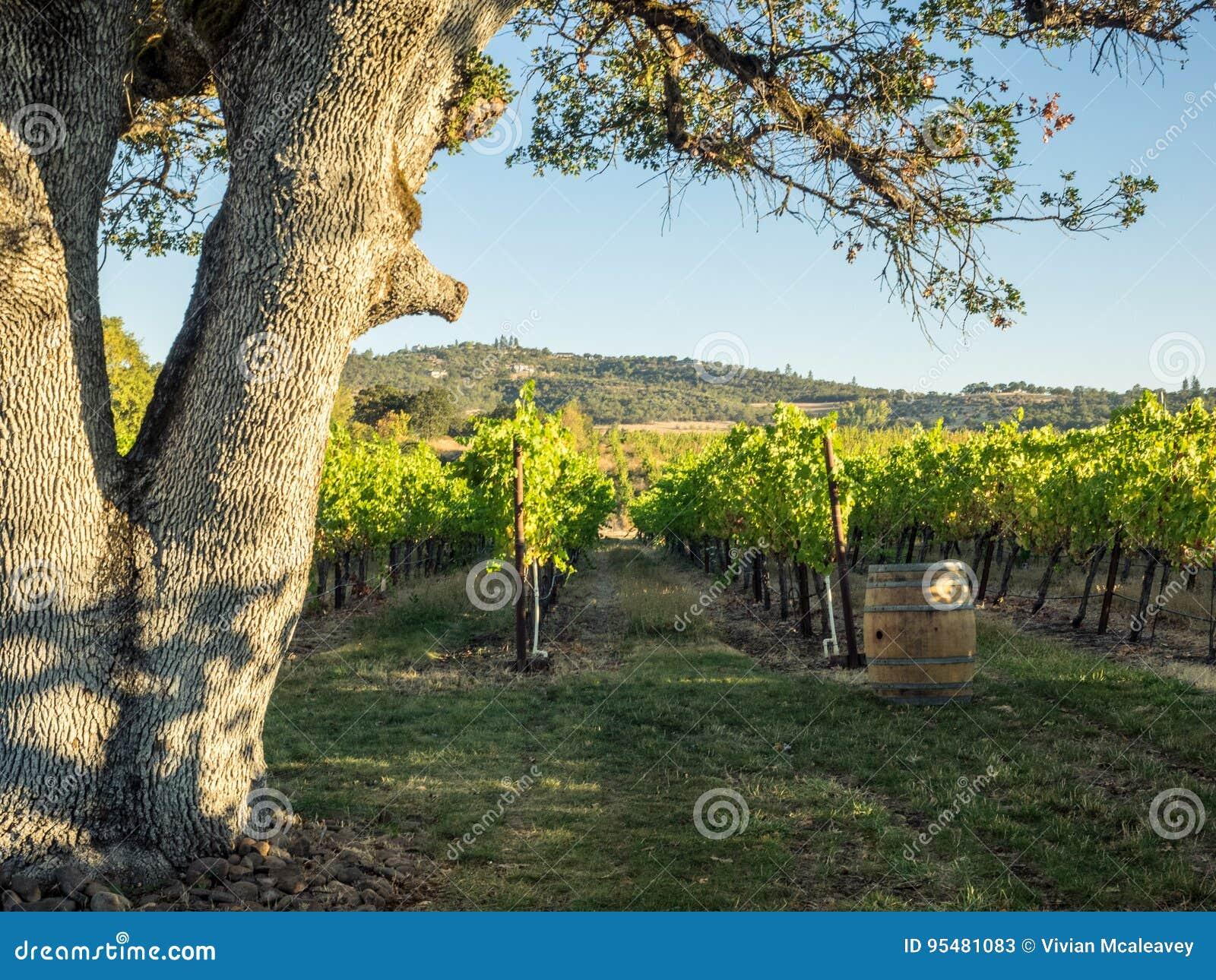 Winnica i wytwórnia win w obszarze wiejskim