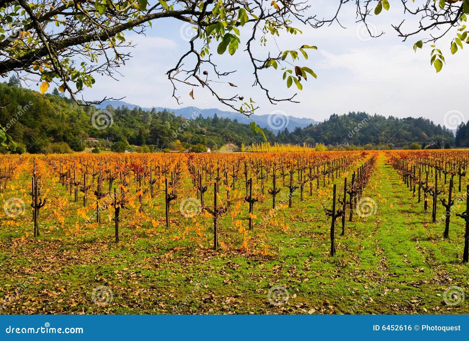 Winnica jesieni
