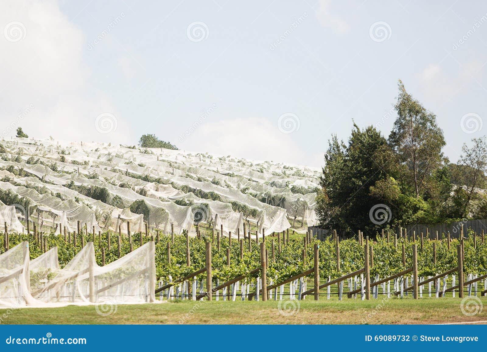 Winnica północny Tasmania