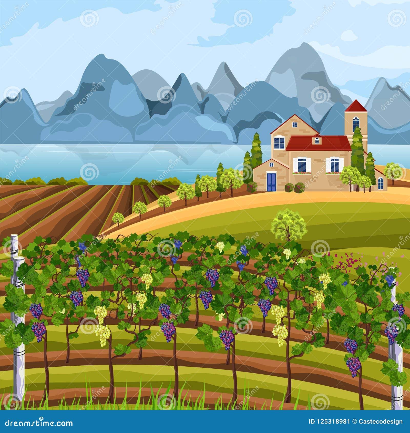 Winnicy dorośnięcia żniwa wektor Piękni lato gór i poly widoki