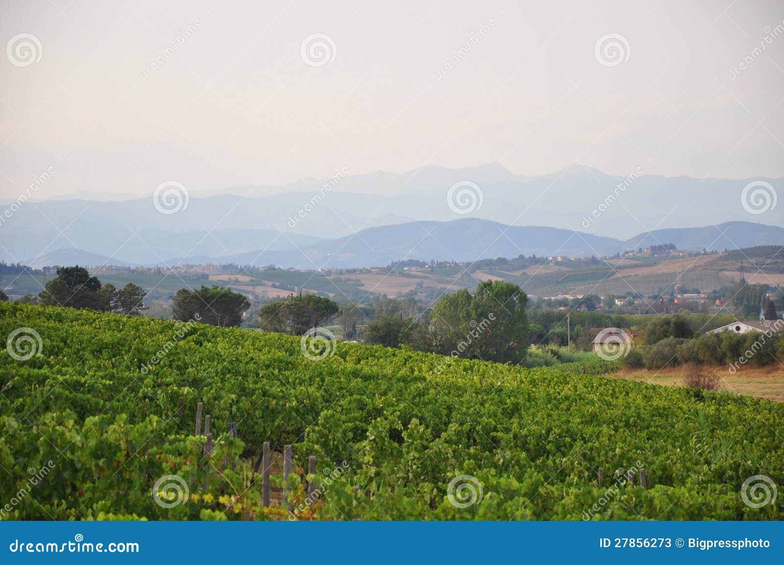 Winnicy Florence Tuscany Italy