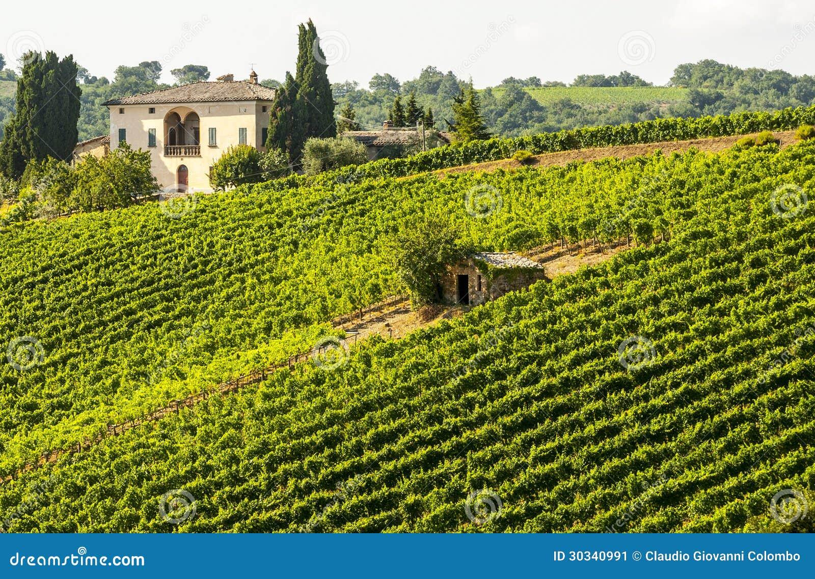 Winnicy Montalcino (Tuscany)