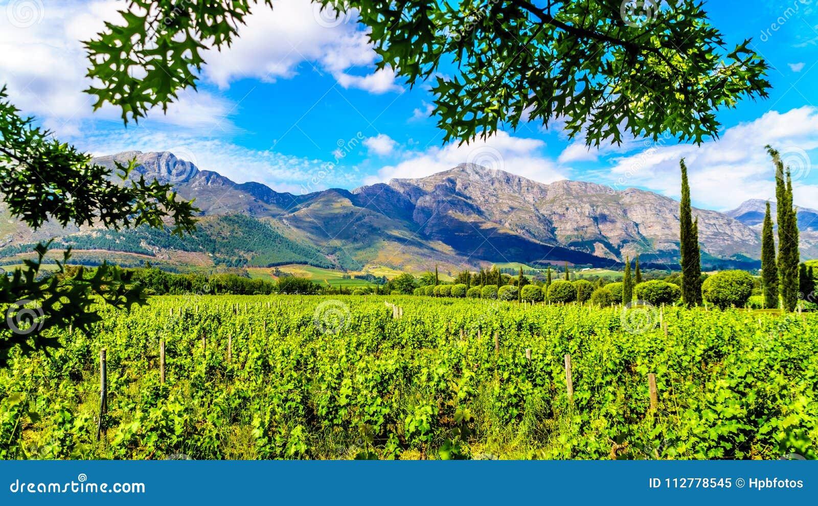 Winnicy przylądek Winelands w Franschhoek dolinie w Zachodnim przylądku Południowa Afryka, wśród otaczającego Drakenstein