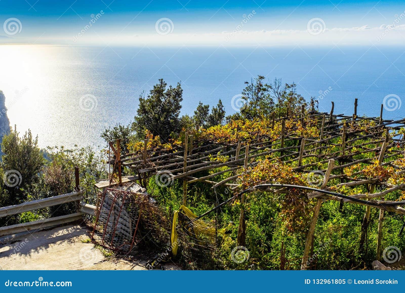 Winnicy wśród wzgórzy wzdłuż Amalfi Suną