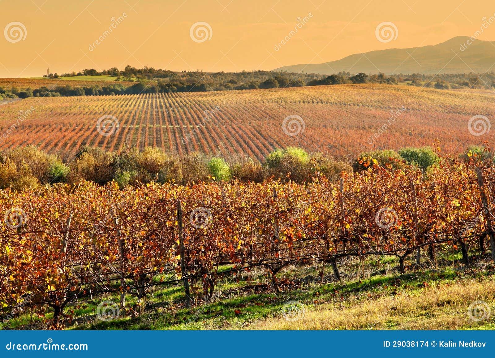 Winnicy w jesieni