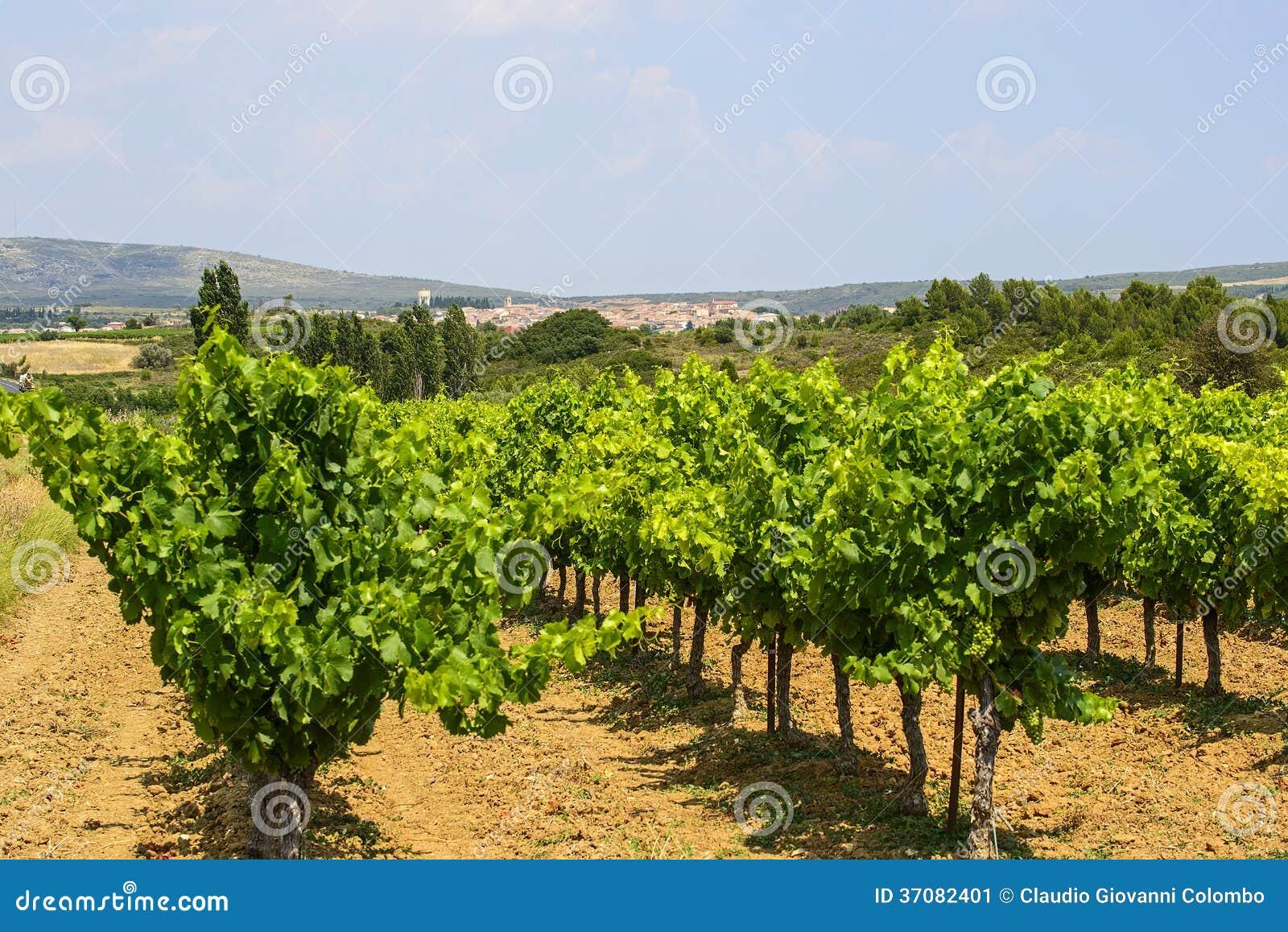 Download Winnicy W Languedoc Roussillon Obraz Stock - Obraz złożonej z nikt, budynek: 37082401