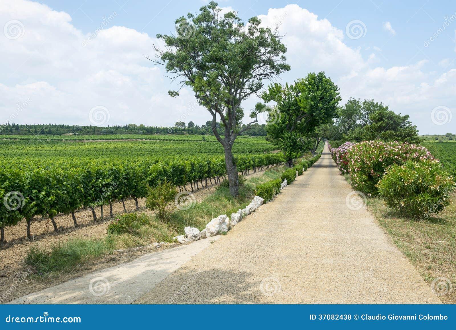 Download Winnicy W Languedoc Roussillon Zdjęcie Stock - Obraz złożonej z plenerowy, droga: 37082438