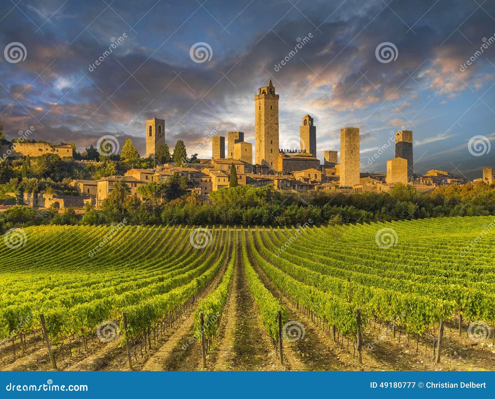 Winnicy zakrywający wzgórza Tuscany, Włochy