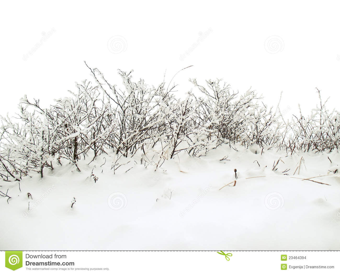 With white christmas background and snow vector vector background - Winter Background With Snowy Bush Stock Images Image