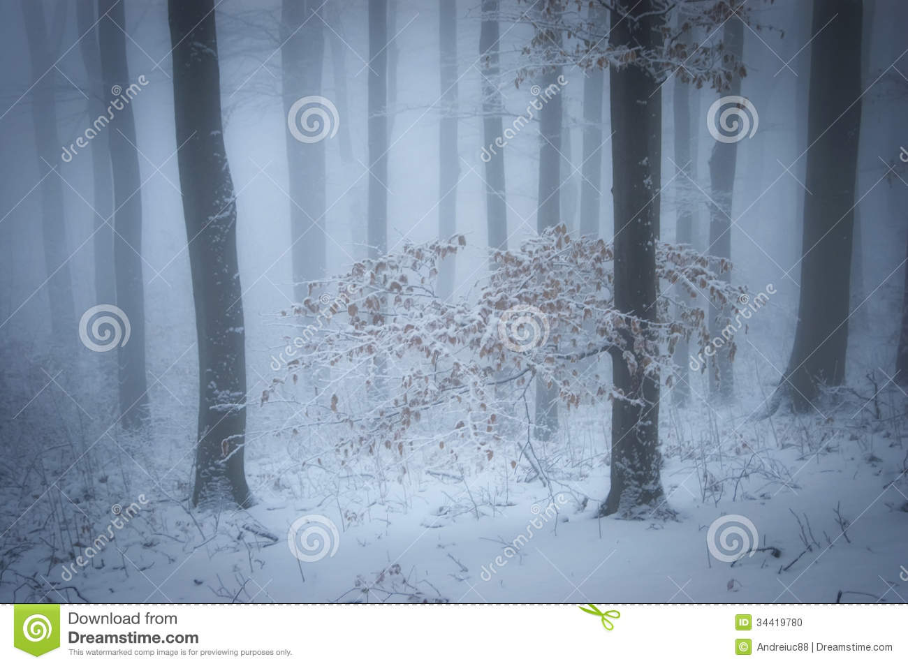 Winter in a beautiful foggy forest