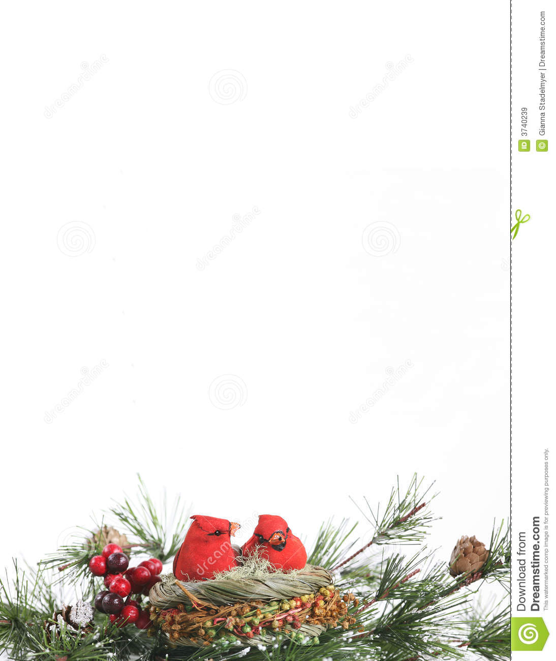 winter cardinals in evergreen stationary stock image image of