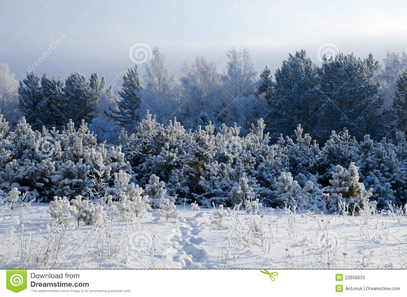 Winter Day In Siberia Stock Photos Image 22658033