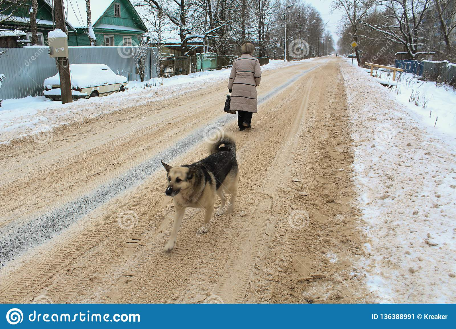 Winter dog road woman
