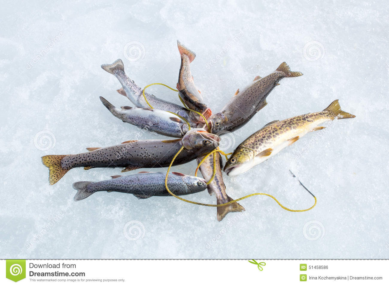 fish stringer stock photos images u0026 pictures 65 images