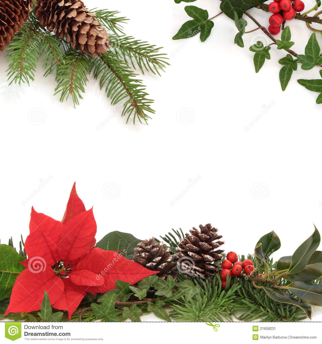 winter flora and fauna border stock image