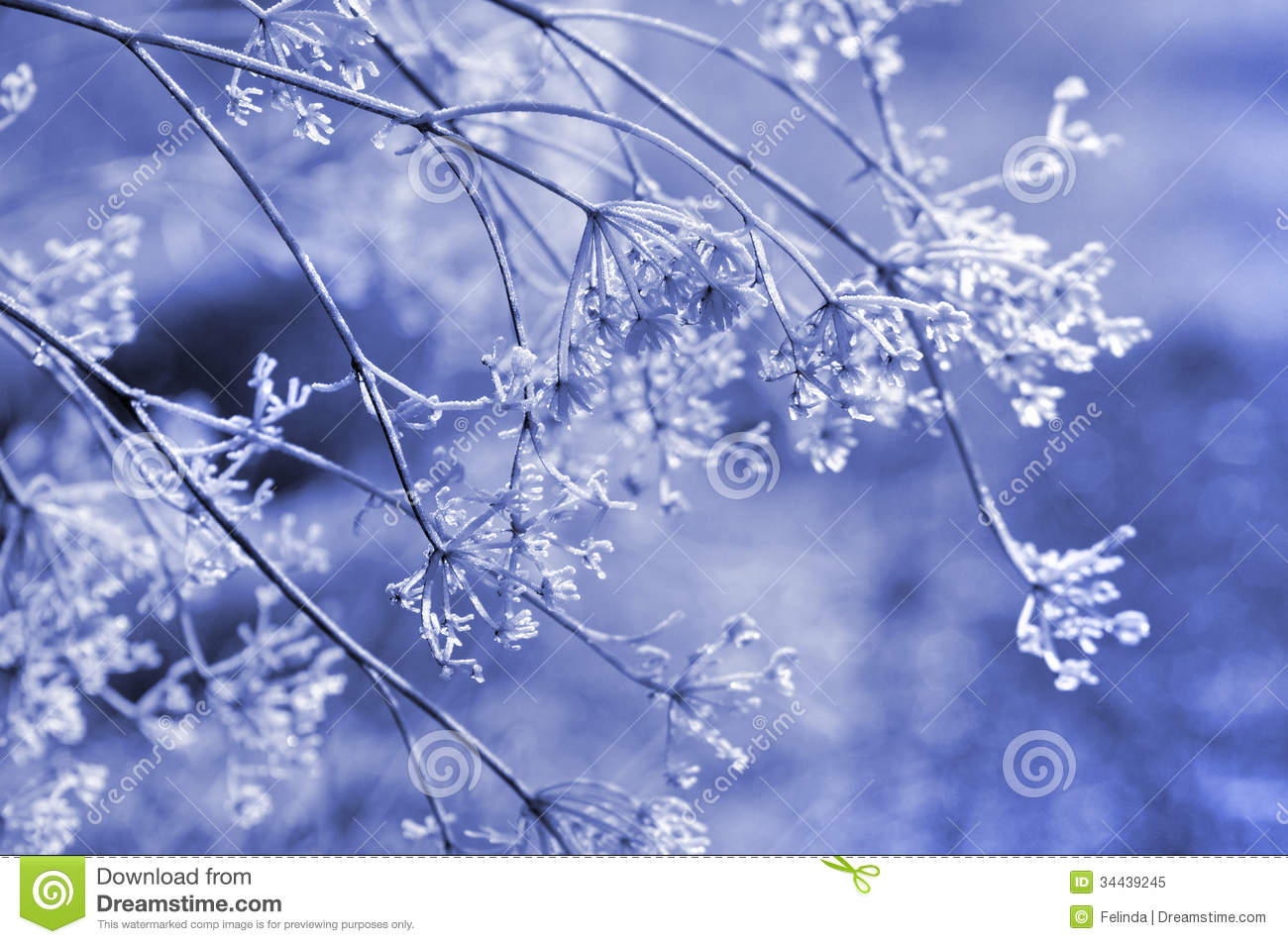 Winter Floral Background Stock Image Image Of Isolated