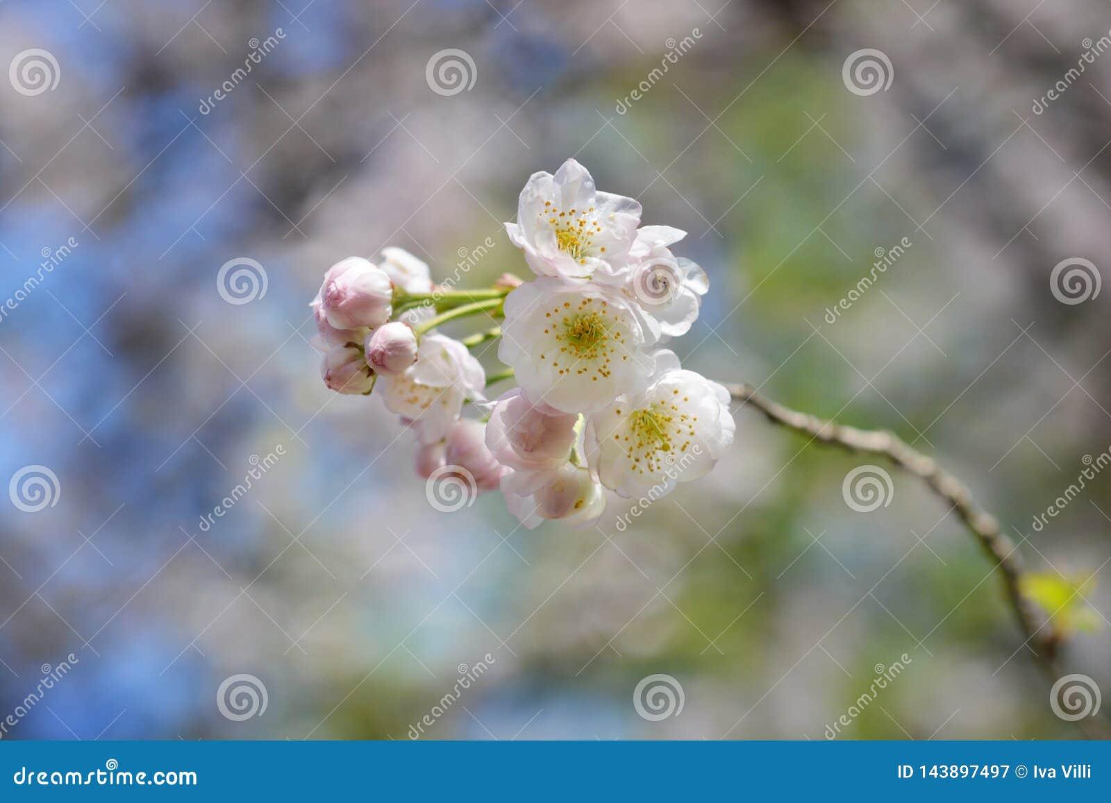 Winter-flowering kers