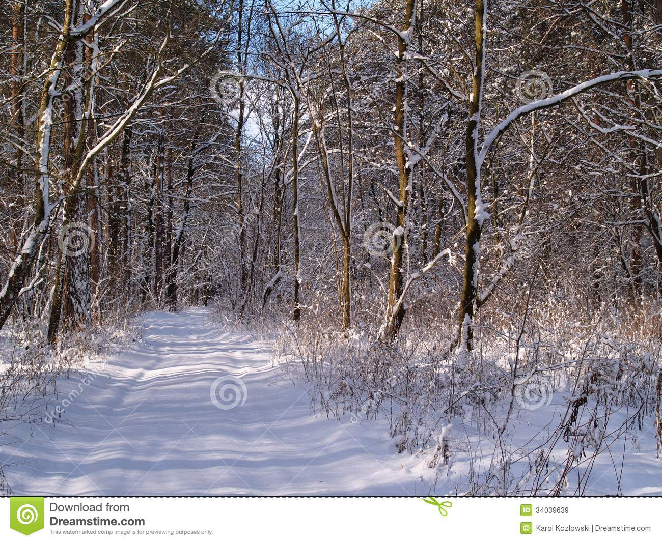 Beautiful Winter Forest Landscapes