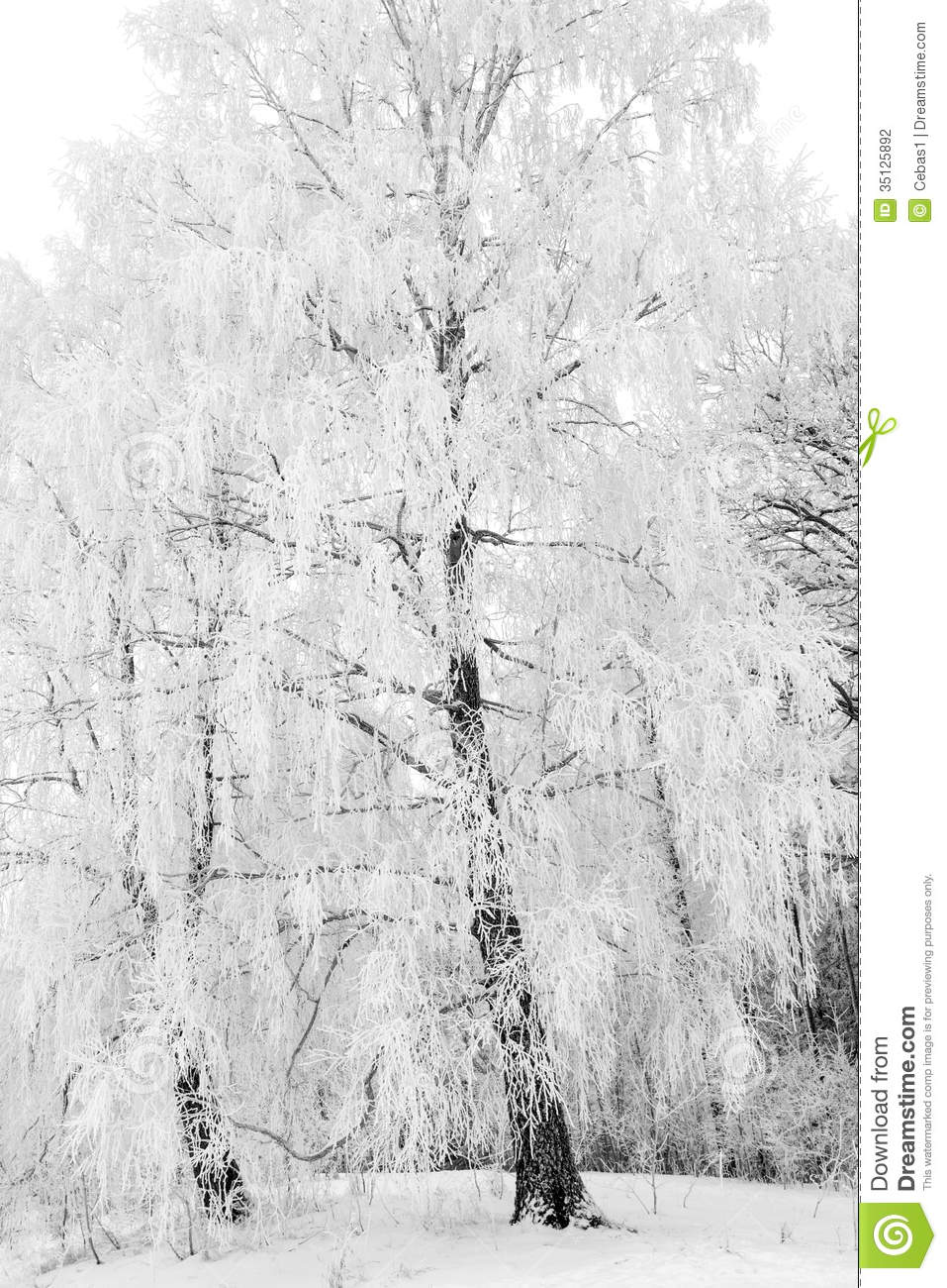 winter forest stock photography image 35125892