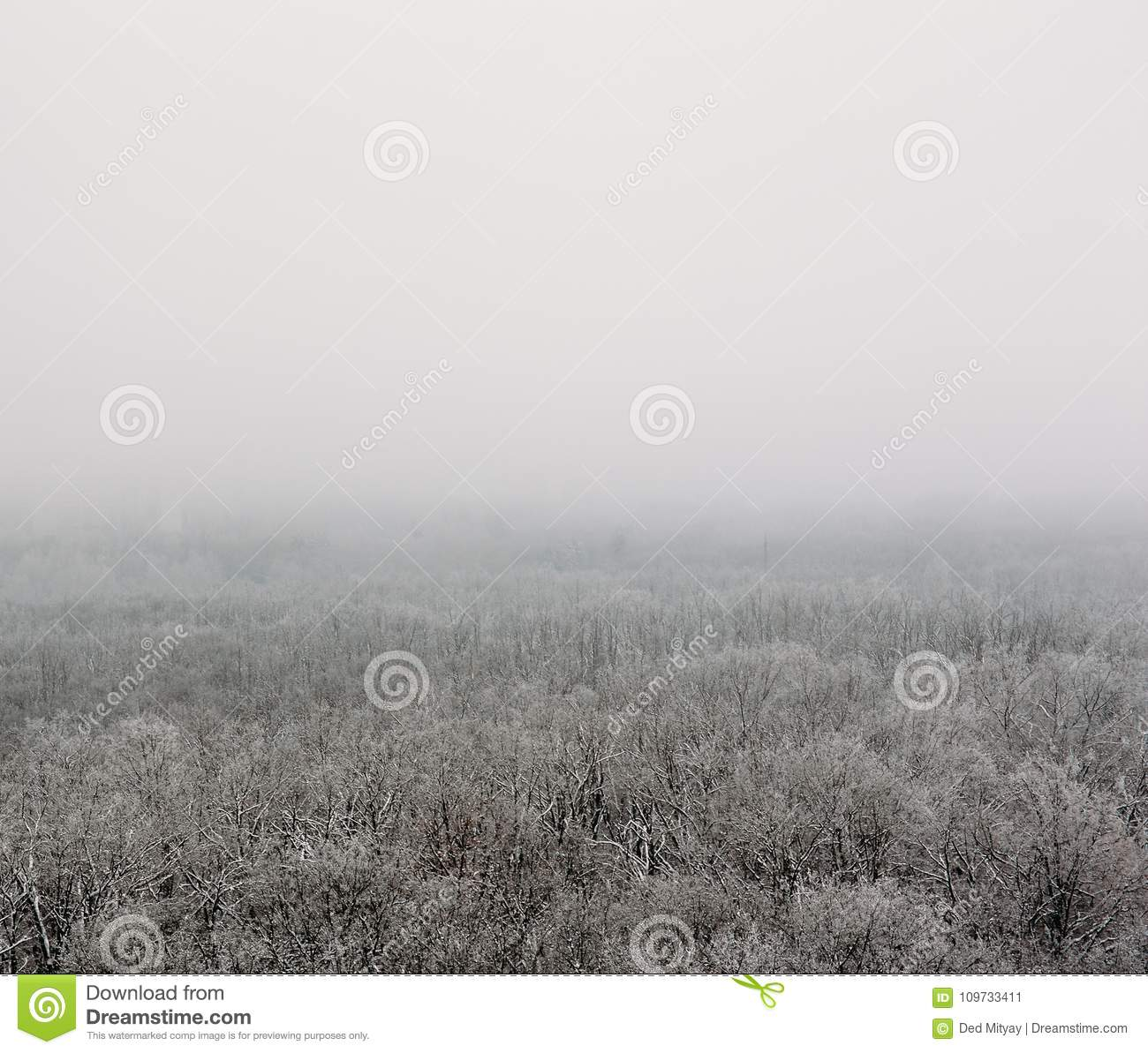 Download Winter Forest In Fog Or Myst, Aerial View. White Nature Landscape, Frost And Tranquility Stock Image - Image of beautiful, snow: 109733411