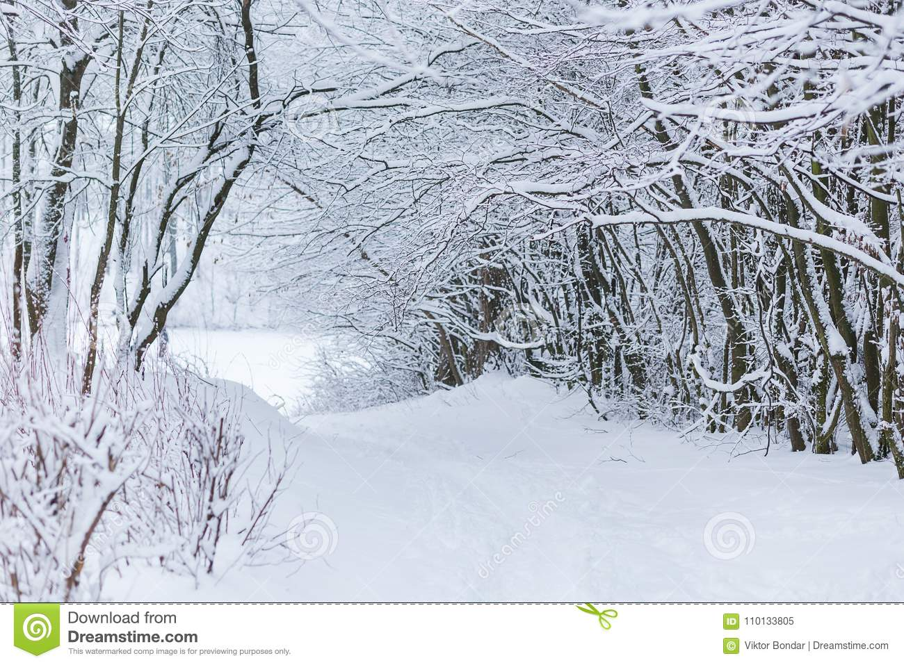 Winter forest landscape with snow
