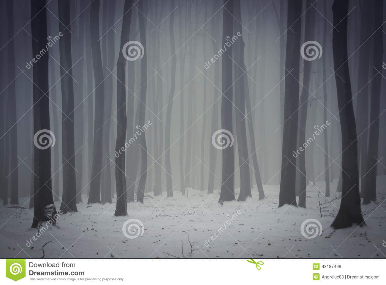 mysterious forest in winter - photo #10