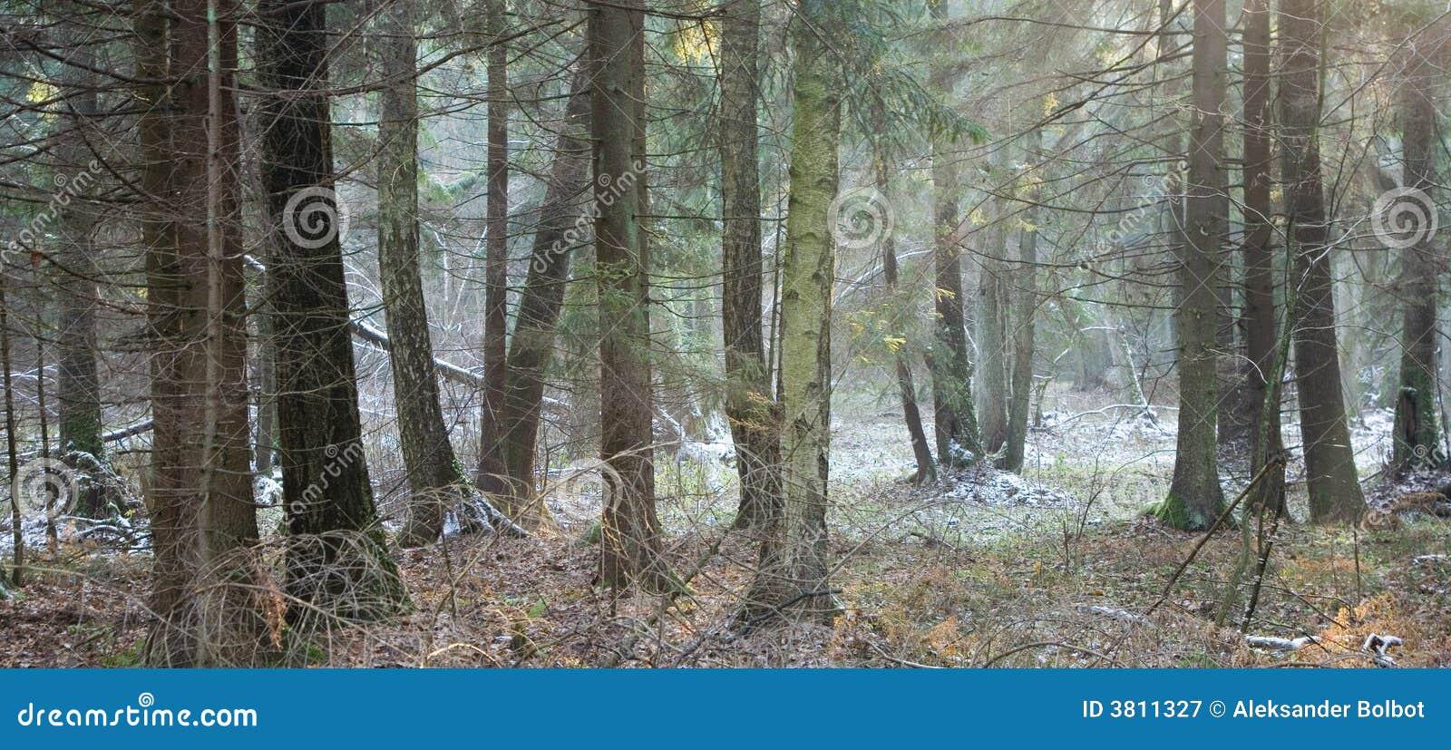 Winter gemischter Wald vor Sonnenuntergang