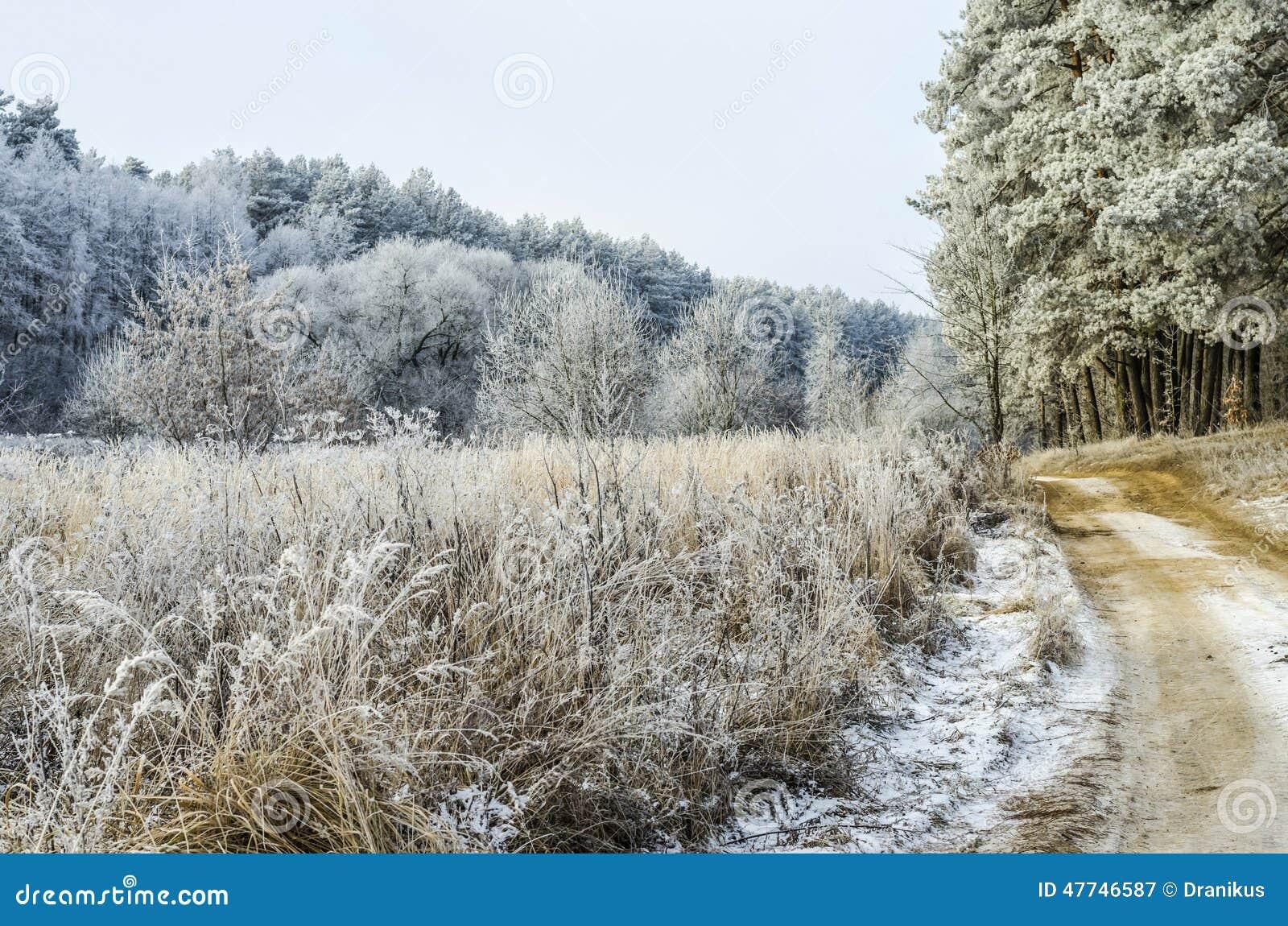 winter hintergrund weihnachten wald landschaft natur. Black Bedroom Furniture Sets. Home Design Ideas