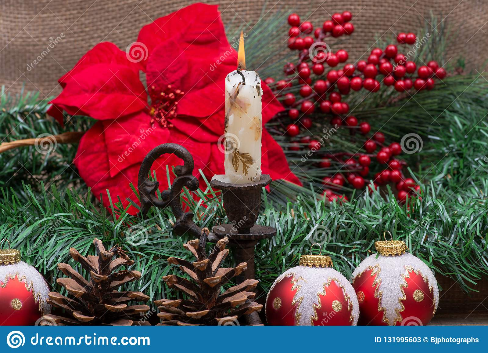 e9d5ab3994f5 Winter Holiday Decoration: Blooming Red Poinsettia, Pine, Berry Bush ...