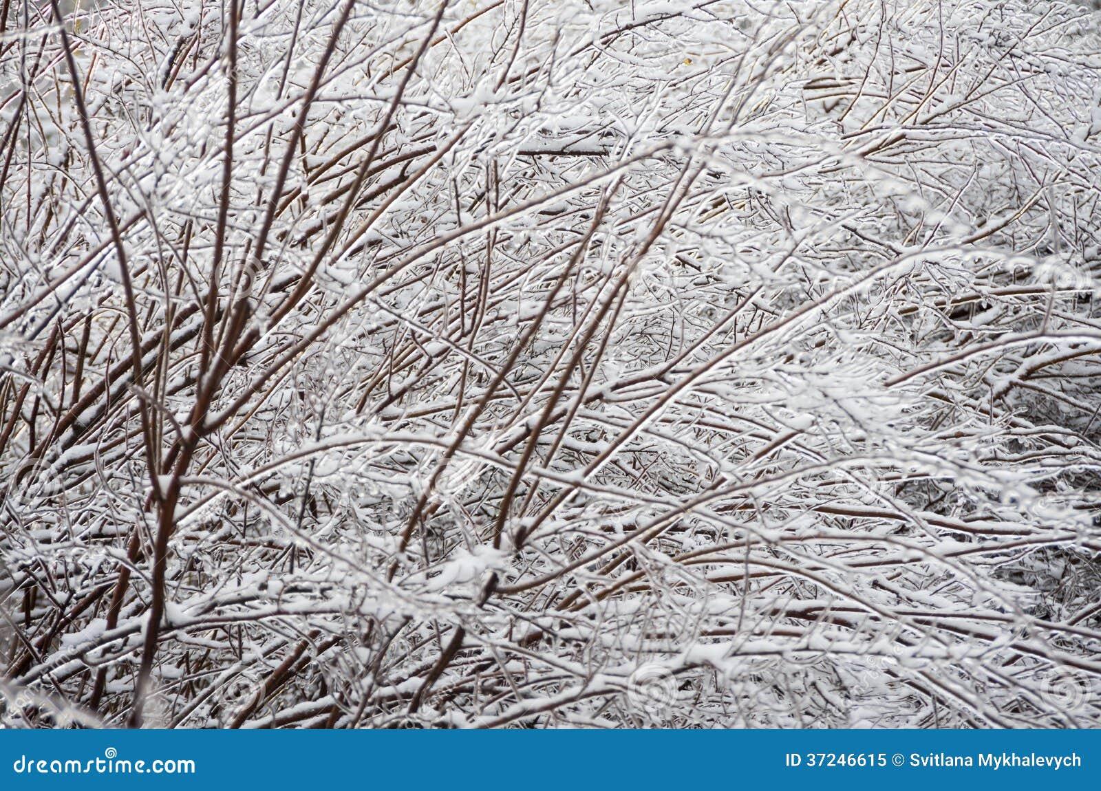 Winter. Icing.