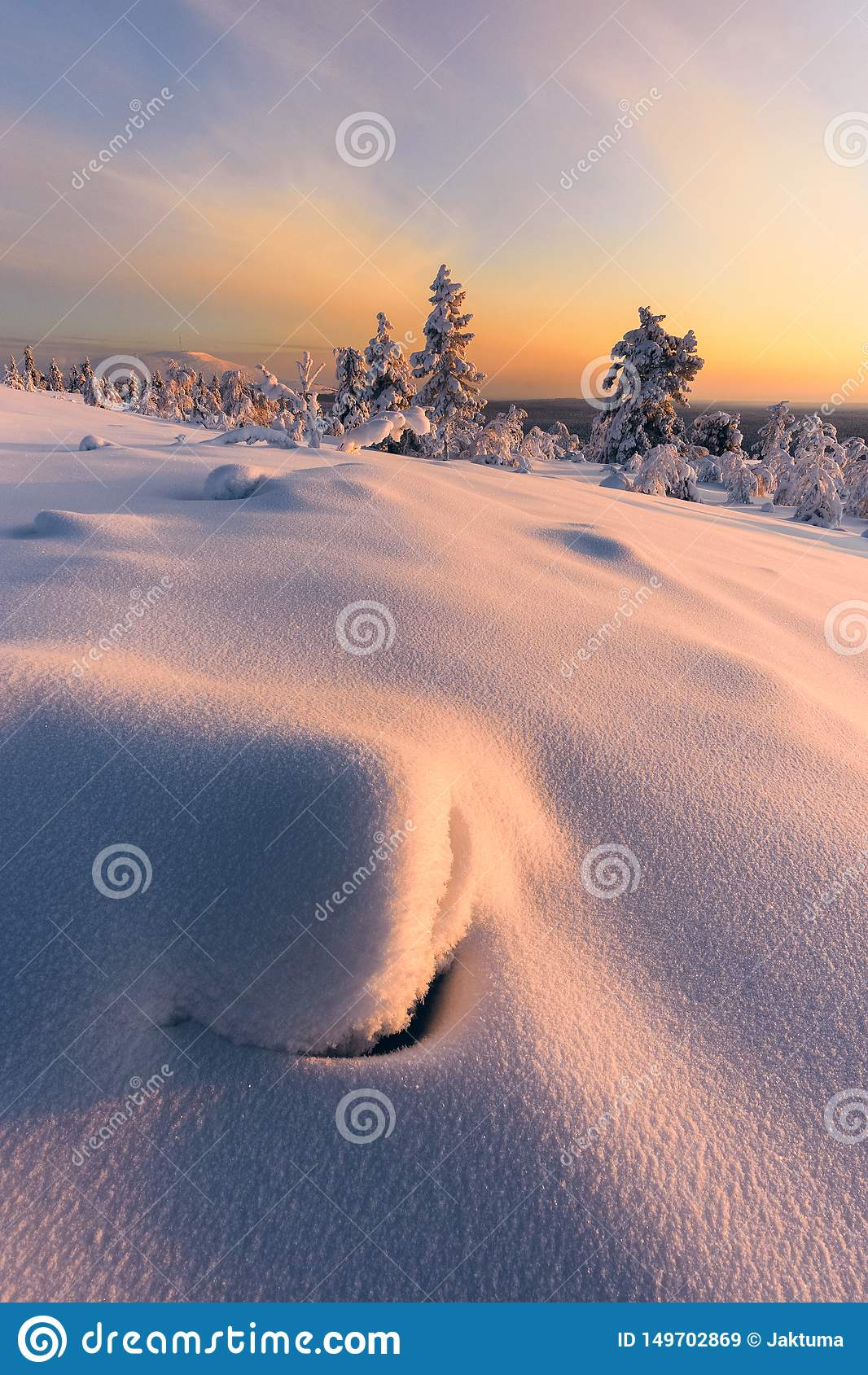 Winter im taiga Wald