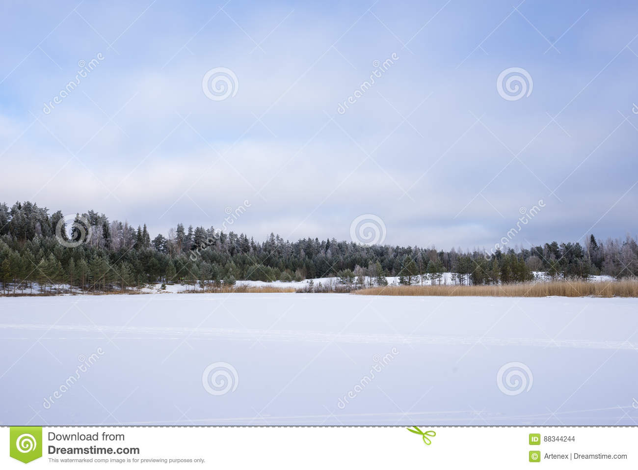 Winter in the lake. Icy cold forest. Frosty wood and ground. Freeze temperatures in nature. Snowy natural environment.