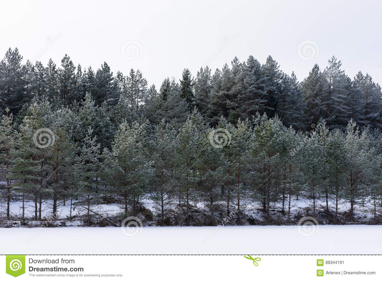 Winter in the lake. Icy cold forest. Frosty wood and ground. Freeze temperatures in nature. Snowy natural environment