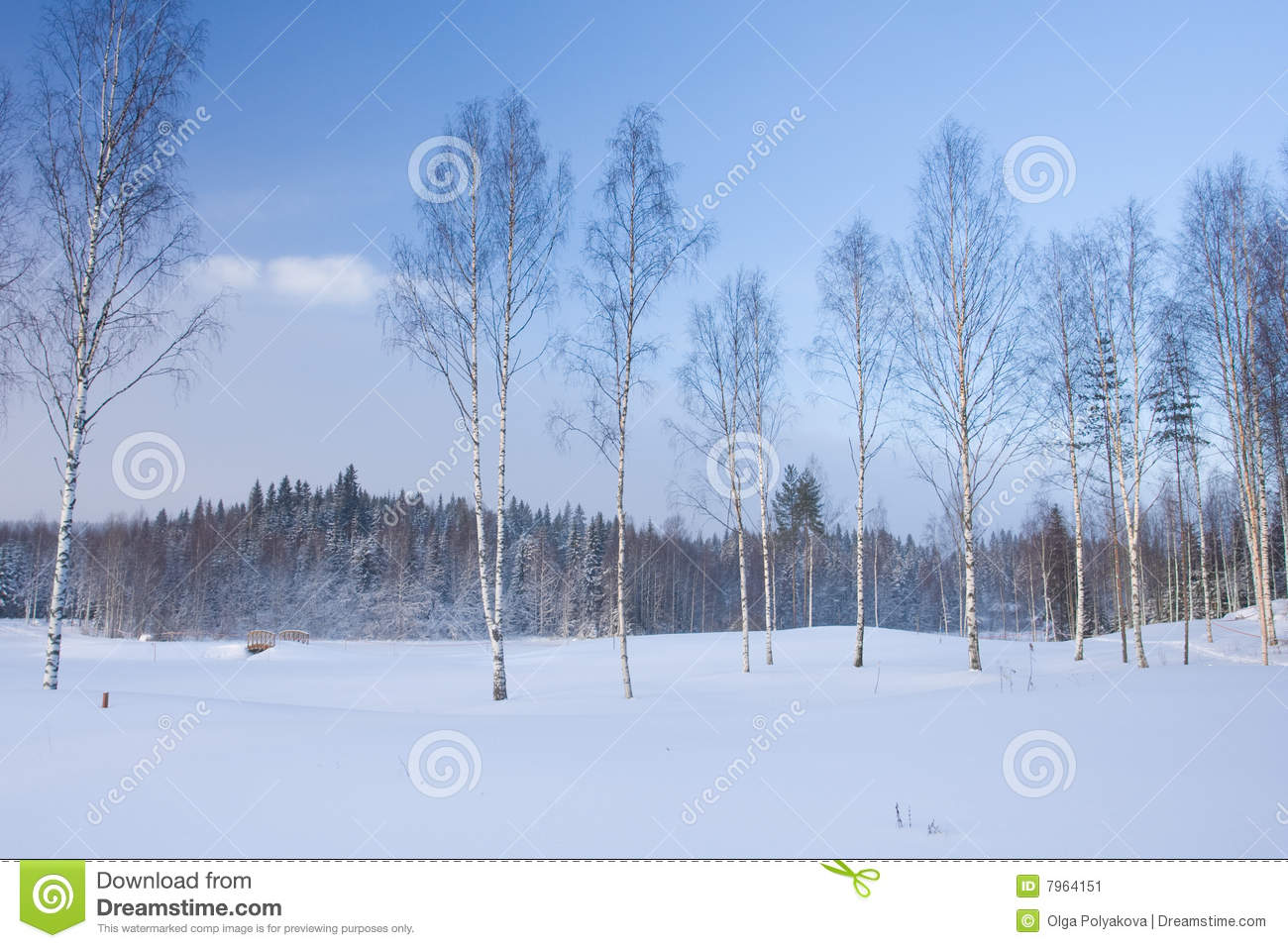 Birch trees in the winter stock photo image 2170700 - Winter Landscape With Birch Trees Stock Image