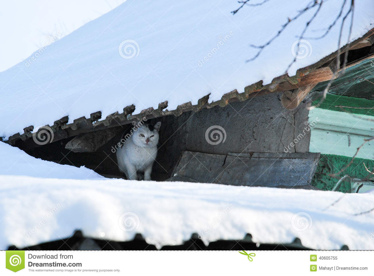 in snow Pussy the