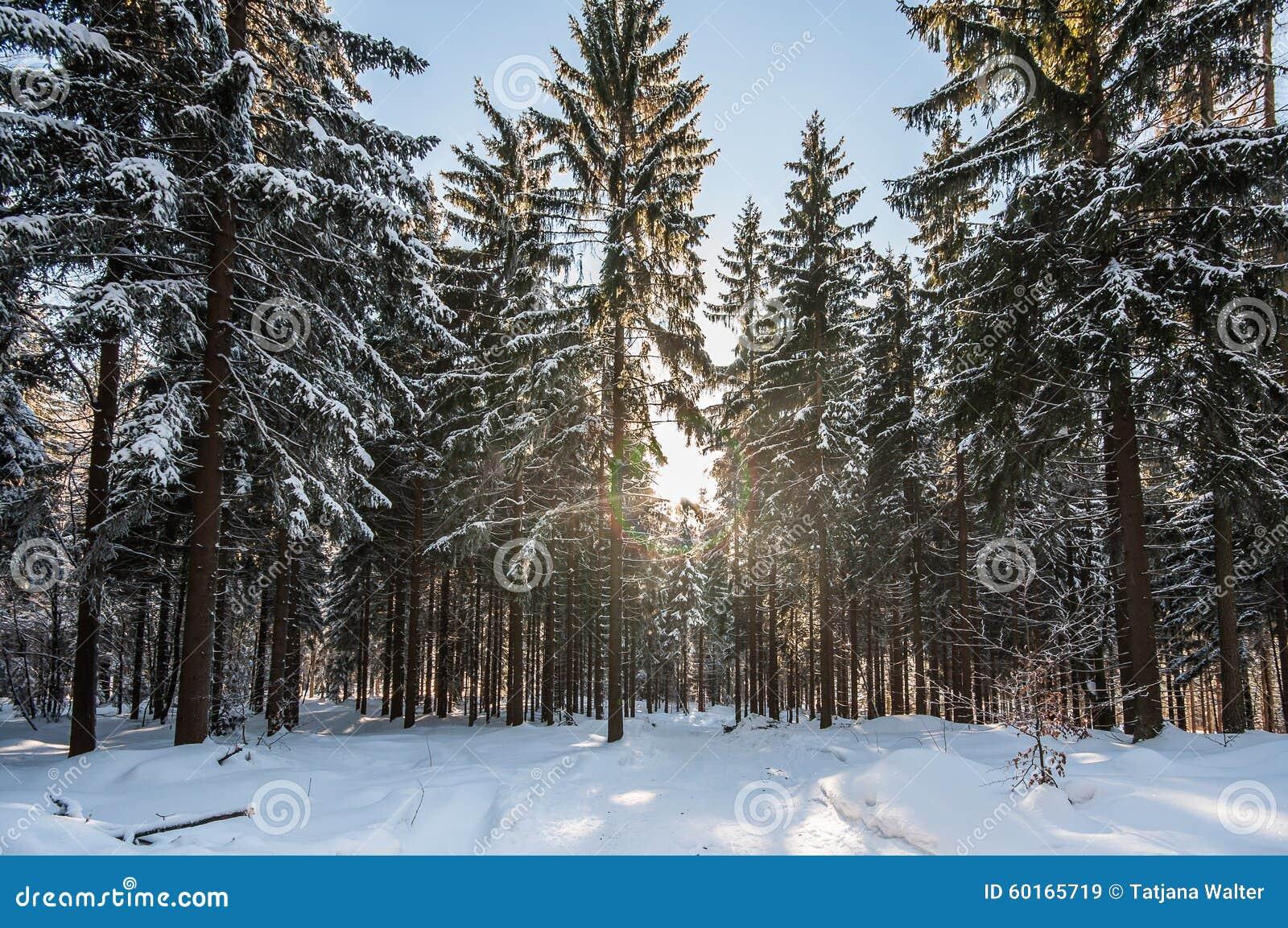 winter-landscape-fresh-clean-snow-sun-christmas-trees-snowy-sunny-fir-tree-foreground-tree-stump-blue-sky-60165719 Fresh Christmas Trees Prices