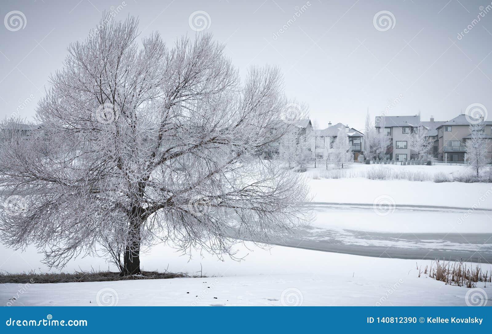 Winter Landscape with frosty tree in neighborhood park