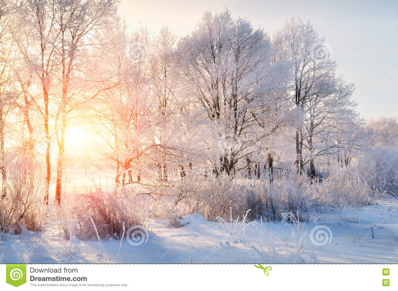 Winter Landscape - Frosty Trees In Winter Forest In The Sunny ...