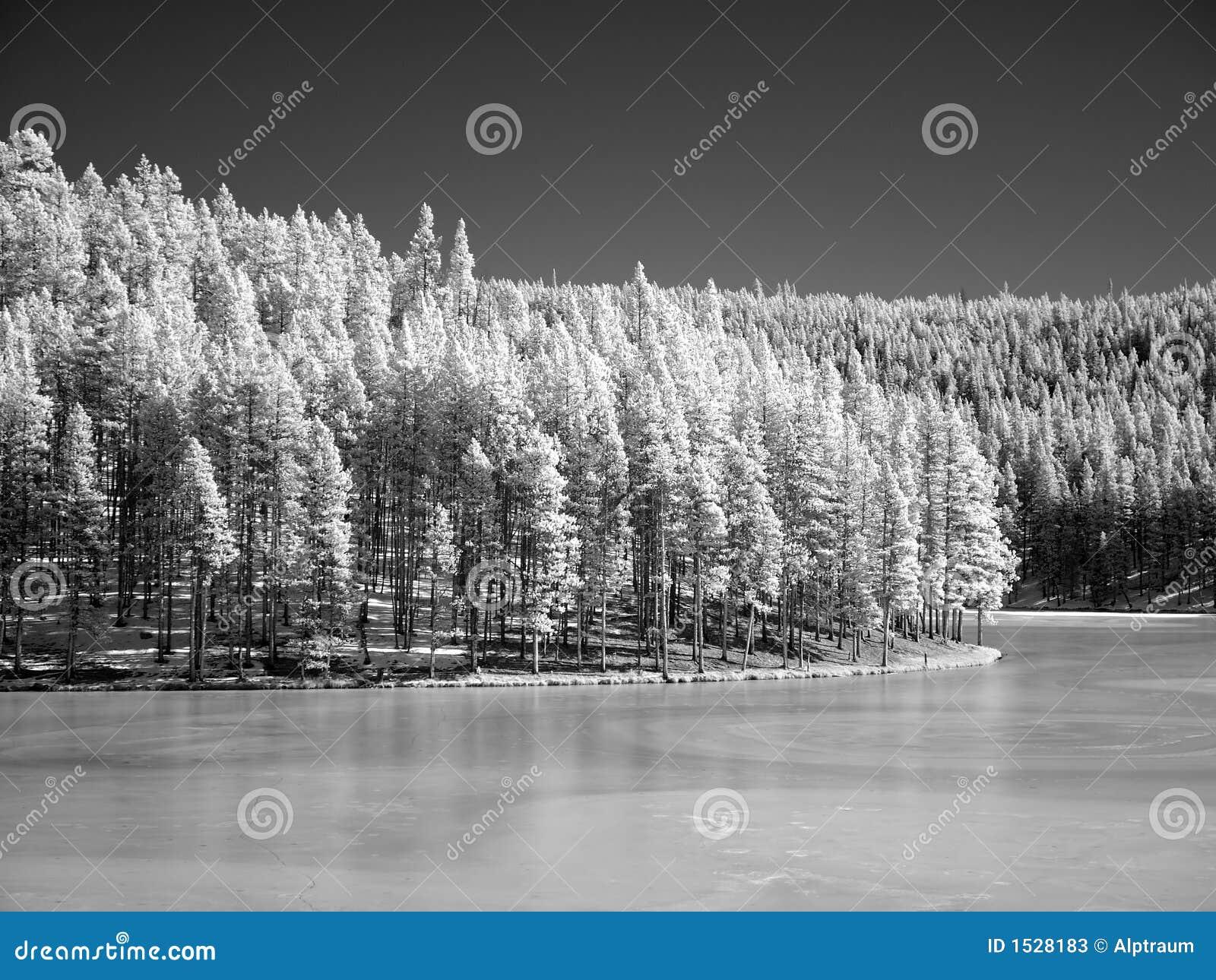 winter landscape in infrared