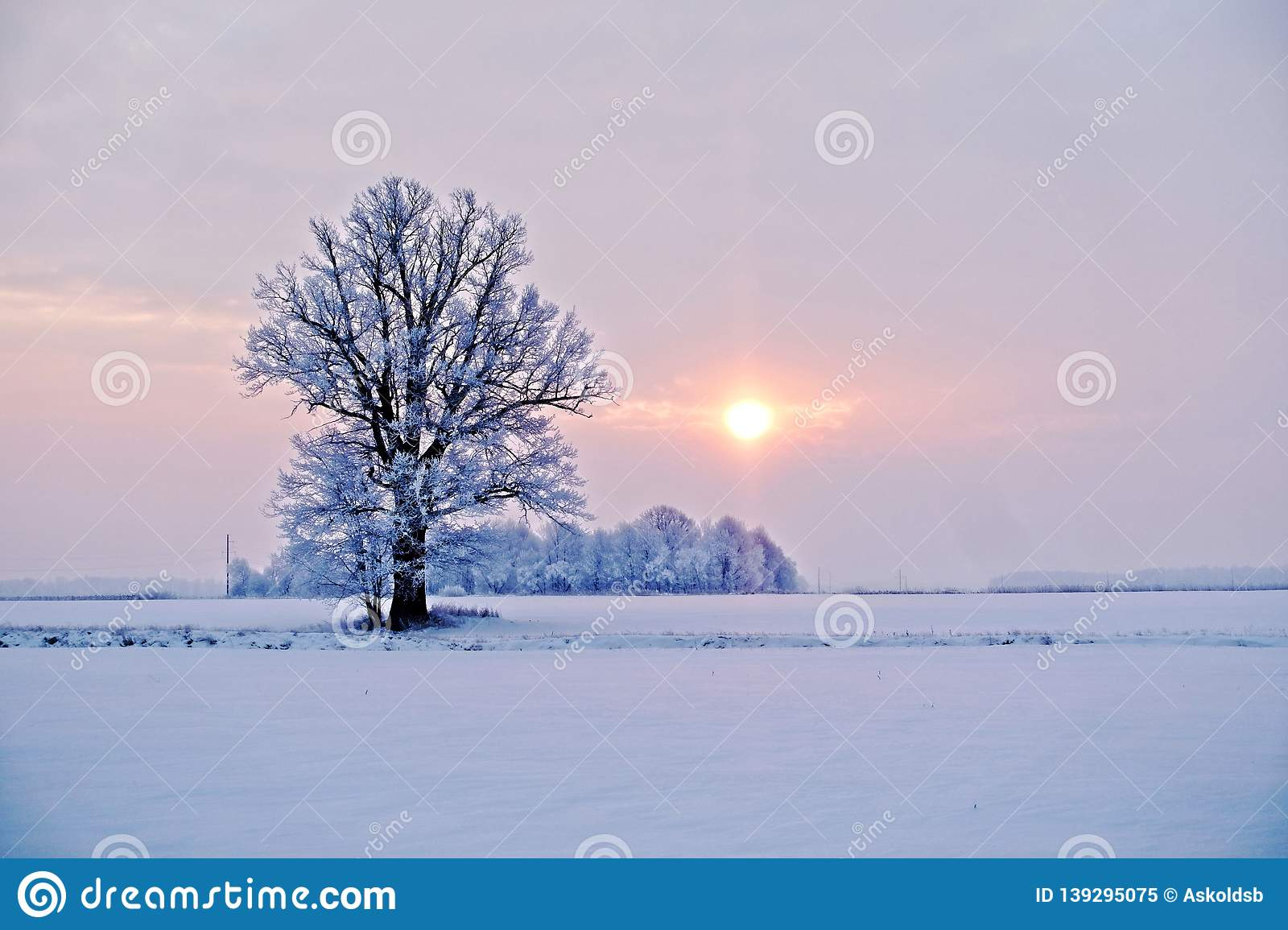 Winter landscape. Lonely tree in a snowy field at sunrise - image