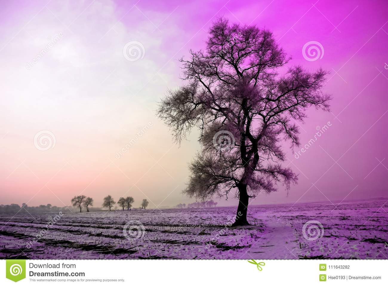 Winter landscape in morning,snow and tree with Ultra Violet tone