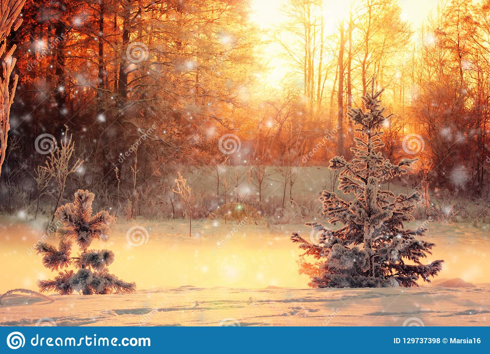 Winter landscape with a small pine and spruce