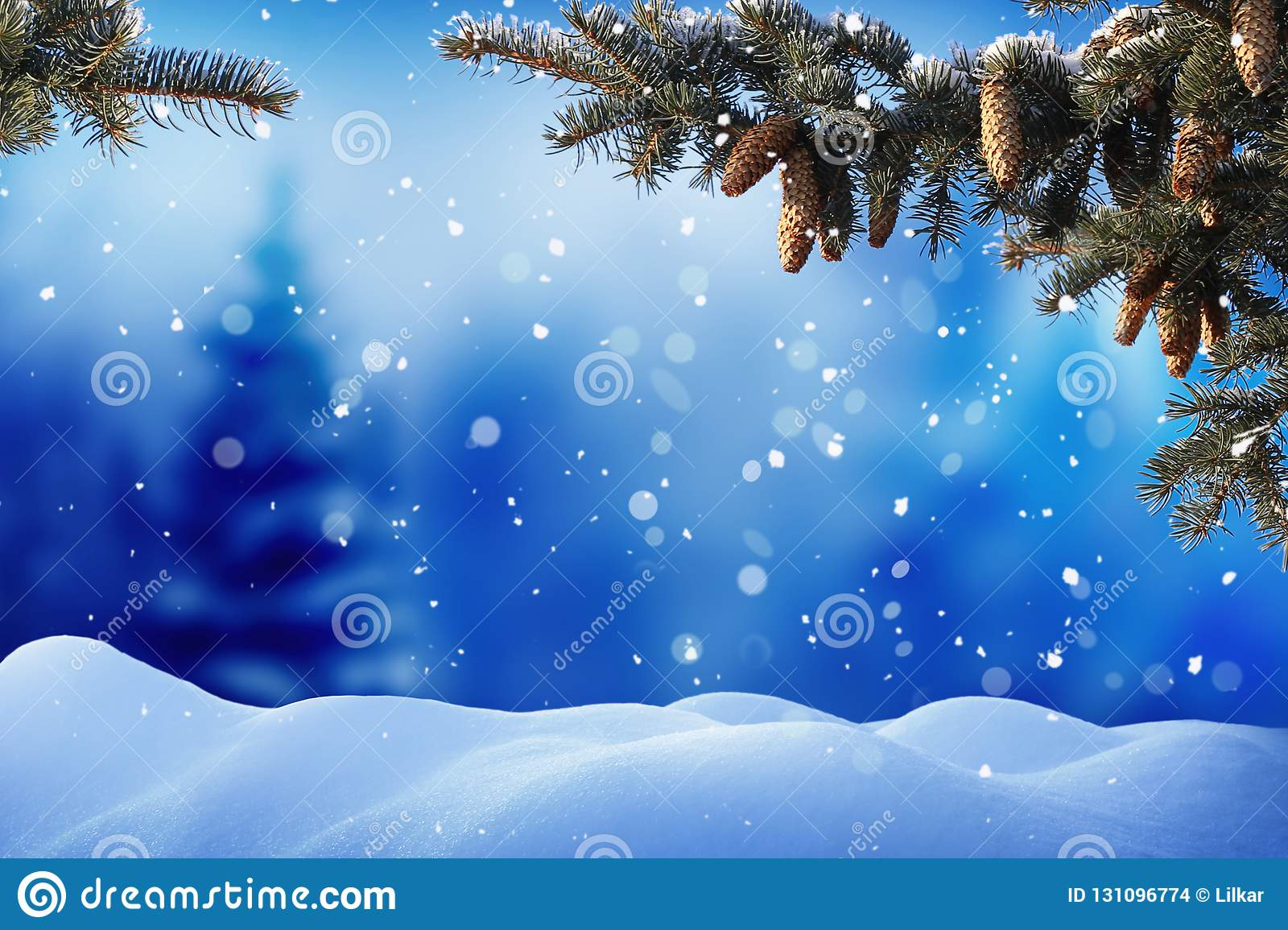 Winter landscape with snow .Christmas background with fir tree